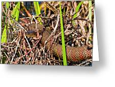 Water Snake In Hiding Greeting Card