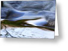 Water Swallow Greeting Card