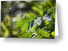 Water-the Essence Of Life V3 Greeting Card