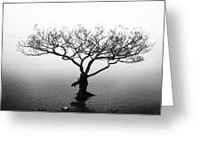 Water Tree Greeting Card