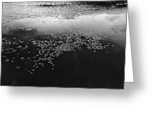 Water Way 2  Greeting Card