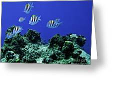 Water World One Greeting Card