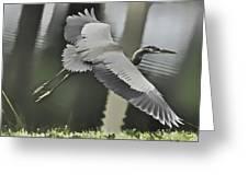 Waterbird Flying Greeting Card