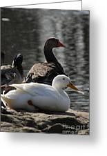 Waterbirds Greeting Card