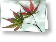Watercolor Japanese Maple Leaves Greeting Card