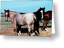Watercolor Mustangs Greeting Card