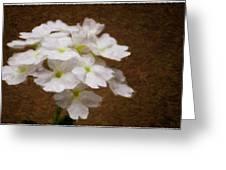 Watercolor Of Daisies Greeting Card