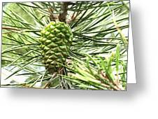 Watercolor Of Ripening Pine Cone Greeting Card