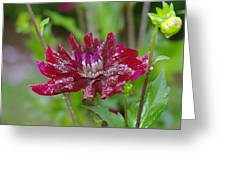 Waterdrops On Petals  Greeting Card