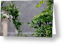 Watered By Nature Greeting Card