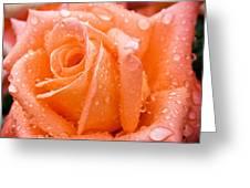 Watered Rose Greeting Card