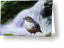Waterfall And Ouzel European Dipper Greeting Card