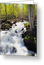 Waterfall By The Aspens Greeting Card