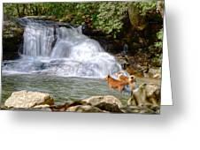 Waterfall Dogs Greeting Card by Bob Jackson
