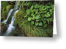 Waterfall Egmont Np New Zealand Greeting Card