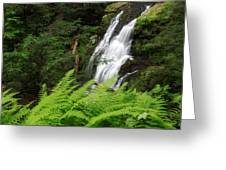 Waterfall Fern Square Greeting Card
