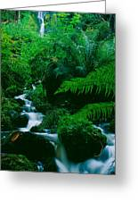 Waterfall In A Forest, Dartmoor, Devon Greeting Card