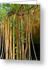 Waterfall Of Jungle Tree Roots Greeting Card
