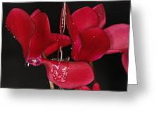 Waterflower Greeting Card