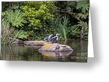 Waterfowl Pond Greeting Card