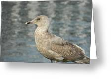 Waterfront Seagull  Greeting Card