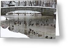Watering Hole Ducks Only Greeting Card