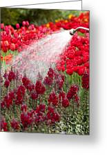 Watering The Garden Greeting Card