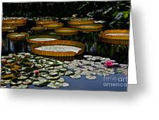 Waterlilies All Greeting Card