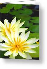 Waterlilies In Pond Greeting Card