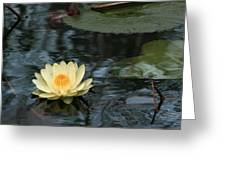 Waterlilly 1 Greeting Card