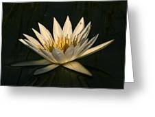 Waterlilly 7 Greeting Card
