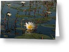 Waterlilly 8 Greeting Card