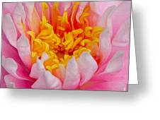 Waterlilly Greeting Card