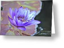 Waterlily And Bee Greeting Card