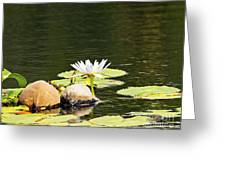 Waterlily And Coconuts Greeting Card