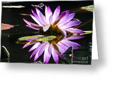 Waterlily And Dragonfly Greeting Card