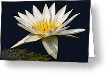 Waterlily And Pad Greeting Card by Susan Candelario