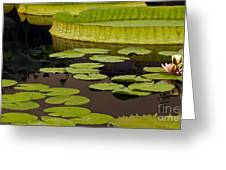 Waterlily Charm Greeting Card
