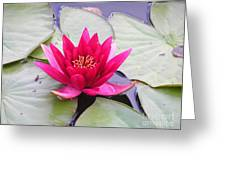 Waterlily In A Pond Greeting Card