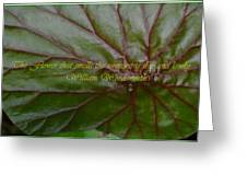 Waterlily Leaf Macro Greeting Card