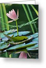 Waterlily Whimsy Greeting Card