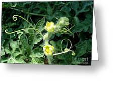Watermelon Flowers And Vine Greeting Card