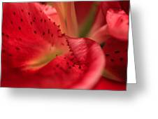 Watermelon Lily Greeting Card by Rachel Cohen