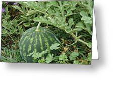 Dew On The Mellon Greeting Card