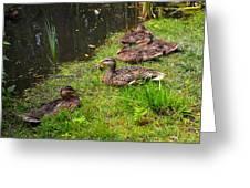 Watershed Ducks Greeting Card