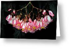 Wax Begonia Greeting Card