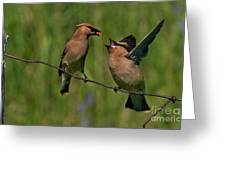 Waxwing Love.. Greeting Card