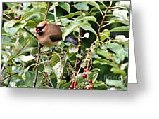 Waxwing Meal Greeting Card