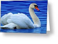Wayward Swan 2 Greeting Card