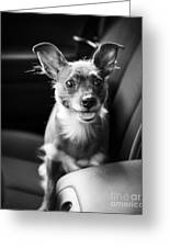 We Goin For A Ride Greeting Card